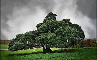Заставки дерево, старое, пасмурно, лес