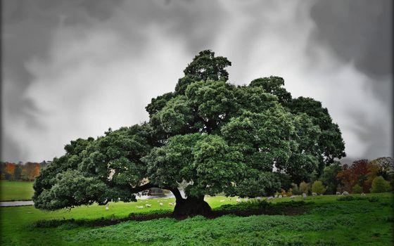 Фото бесплатно дерево, старое, пасмурно