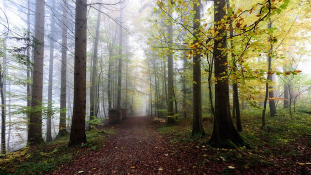 Photo free road through the forest, autumn, fog in the forest