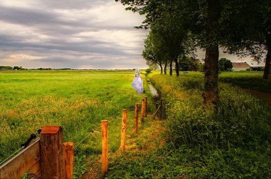 Заставки поле, деревья, забор