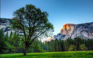 Бесплатные фото поляна,трава,деревья,лес,горы,скалы,небо