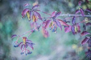 Бесплатные фото ветки, листья, ягоды, осень, природа