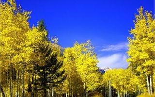 Бесплатные фото осень,лес,деревья,листья желтые,горы,небо