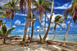 Бесплатные фото Французская Полинезия,Тихий океан,остров,пальмы,берег,пляж,пейзаж