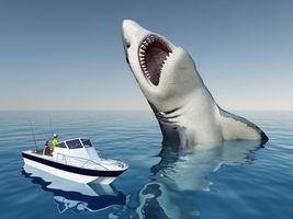 Бесплатные фото акула,хищник,оскал,опасность,art