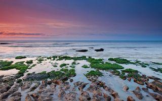 Бесплатные фото берег, камни, рифы, растительность, море, горизонт, небо