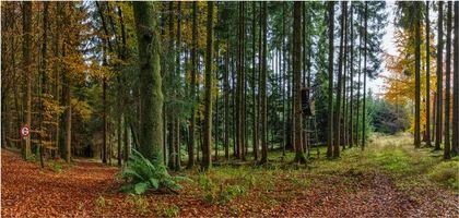 Заставки лес,деревья,осень,дорога,пейзаж