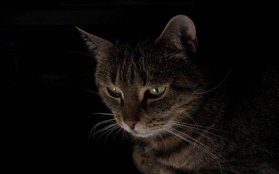 Бесплатные фото темнота,кошка,морда,глаза зеленые,уши,усы,шерсть