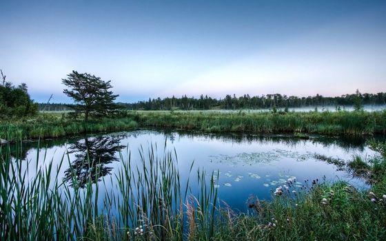Photo free Swamp lake, sedge, fog