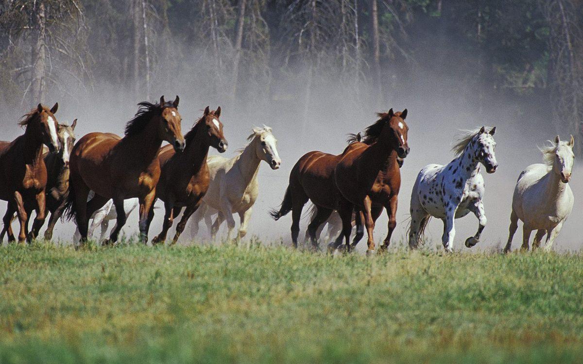 Обои кони, лошади, табун, бегут, деревья, пастбище на телефон | картинки животные