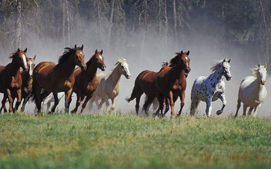Photo free horses, herd, run