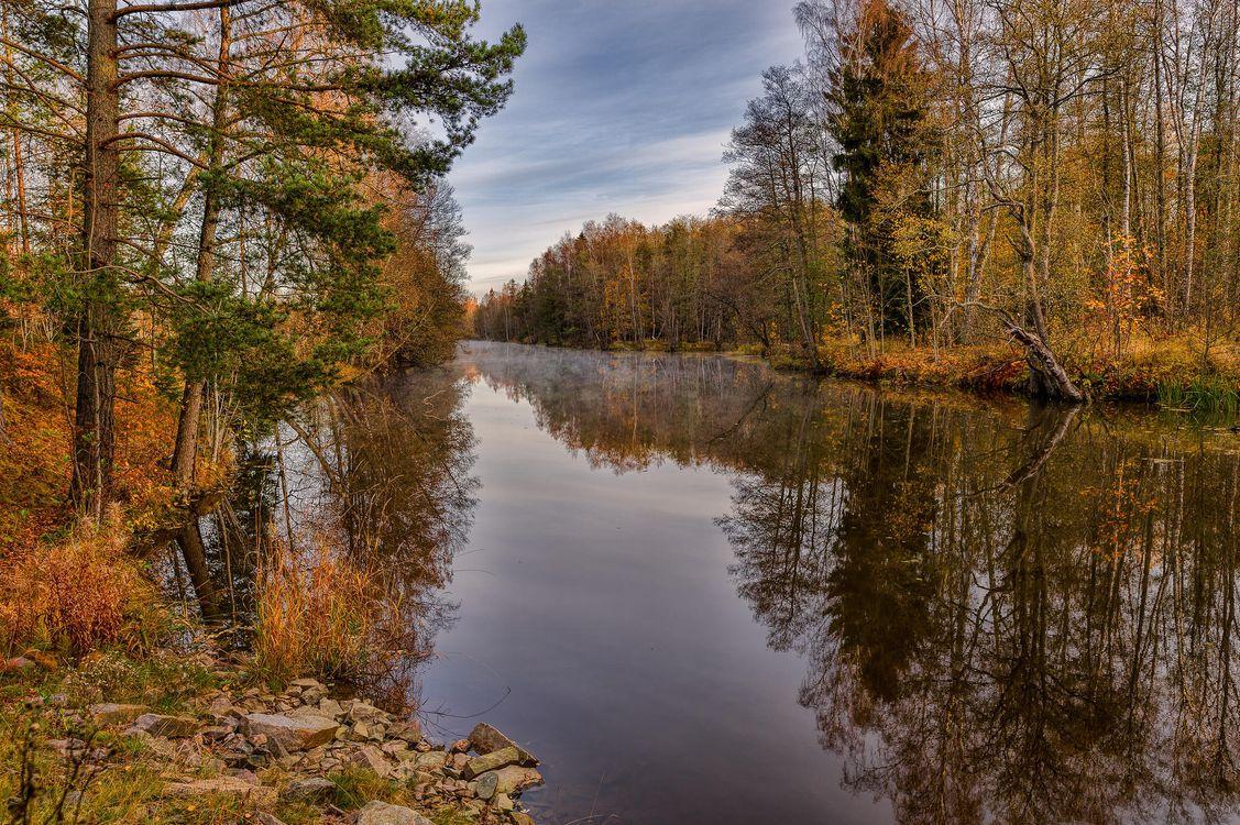 Обои осень, водоём, лес картинки на телефон