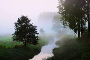 Бесплатные фото ручей,туман,деревья