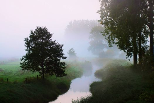 Фото бесплатно ручей, туман, деревья
