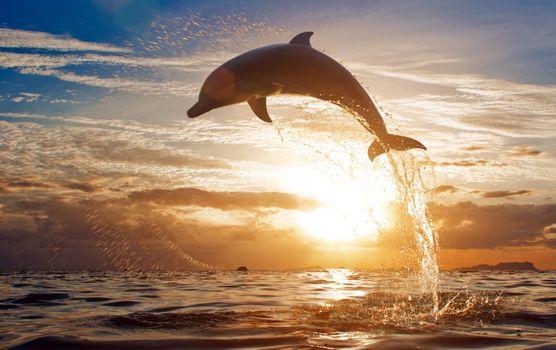 Бесплатные фото дельфин,прыжок из воды,закат солнца