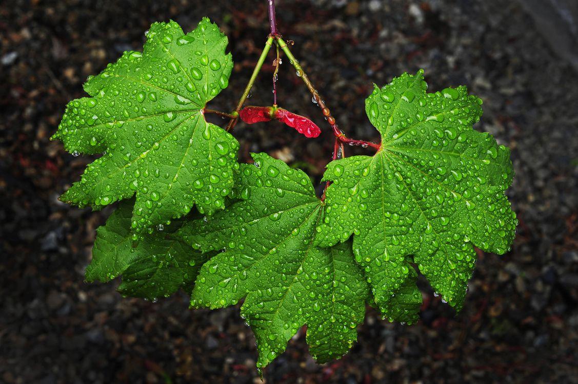 Фото бесплатно ветка, листья, роса, капли, макро, макро