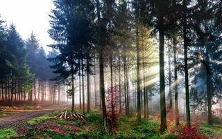 Бесплатные фото лес,свет,лучи,деревья