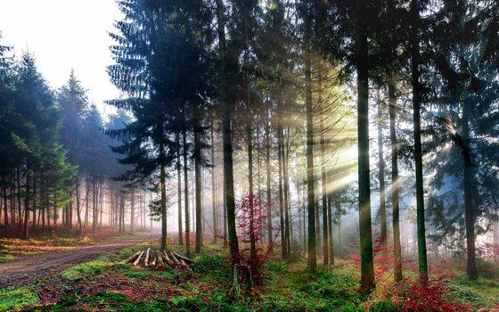 Фото бесплатно лучи, деревья, свет