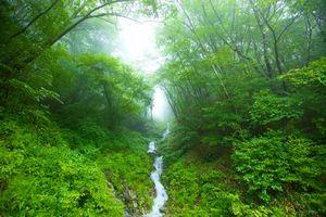 Бесплатные фото лес,деревья,речка,туман,природа