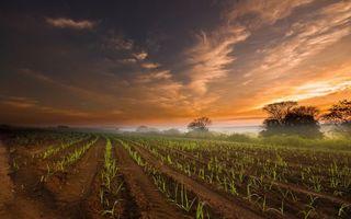 Заставки поле, деревья, небо, закат, облака