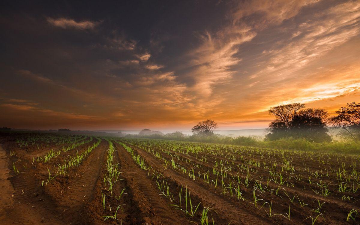 Фото бесплатно поле, деревья, небо, закат, облака, пейзажи