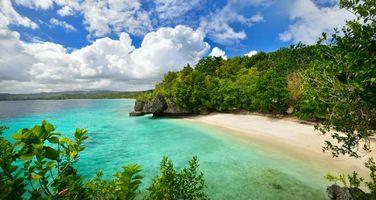 Фото бесплатно острова, деревья, пляж