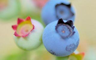Обои ягода, голубика, зеленая, спелая, еда, витамины