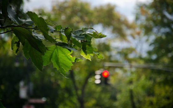 Фото бесплатно улица, деревья, листва