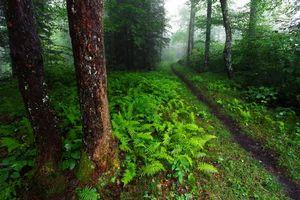Бесплатные фото Great Smoky Mountains National Park,лес,деревья,тропинка,природа