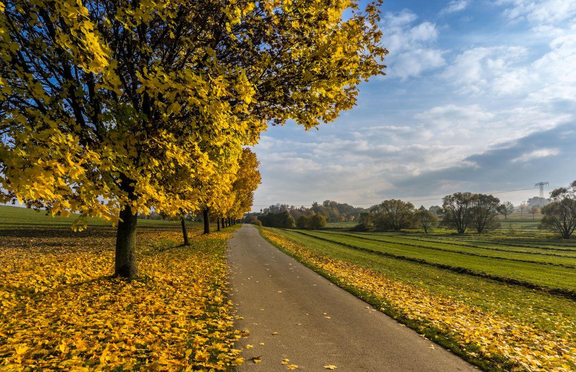 Фото бесплатно осень, поле, деревья, дорога, пейзаж, пейзажи