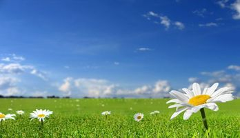 Фото бесплатно поле ромашек, ромашки, газон