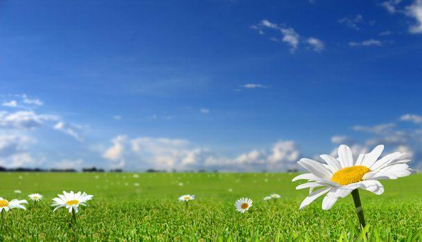 Фото бесплатно поле ромашек, ромашки, газон, небо, облака, летний день, простор