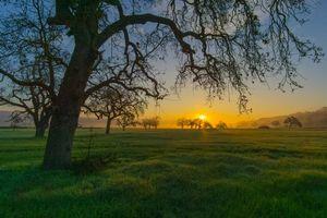 Бесплатные фото поле, закат, деревья, пейзаж