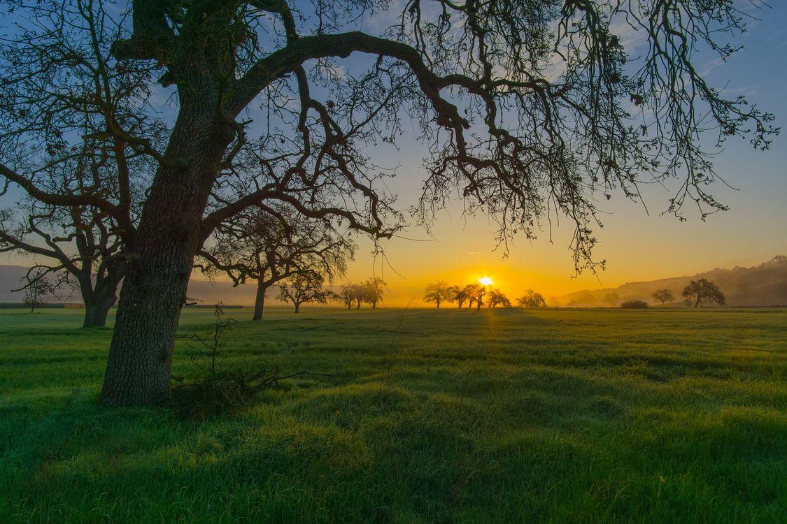 Фото бесплатно поле, закат, деревья, пейзаж, пейзажи