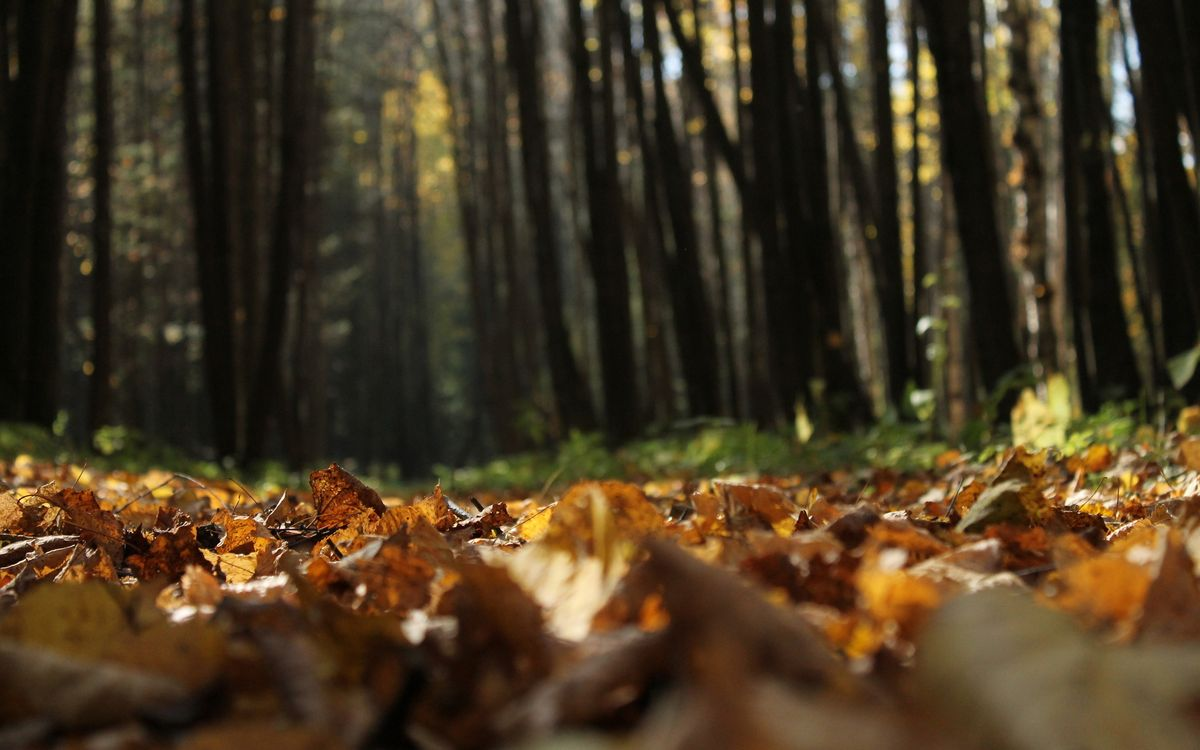 Фото бесплатно листва, трава, деревья, лес, природа