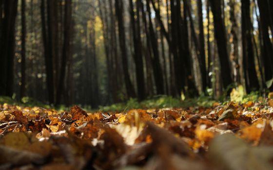 Бесплатные фото листва,трава,деревья,лес