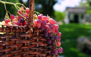 Бесплатные фото корзина,виноград,гроздь,ягоды