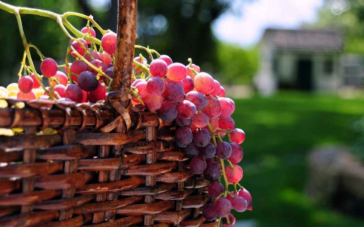 Фото бесплатно корзина, виноград, гроздь - на рабочий стол