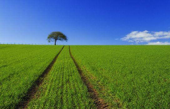 Photo free field, landscape, lone tree