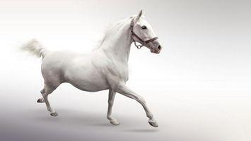 Фото бесплатно белый кон, на белом фоне, скачет