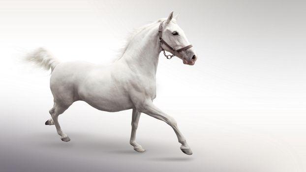 Заставки белый кон, на белом фоне, скачет