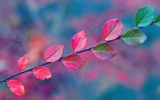 Фото бесплатно паутина, осень, листья