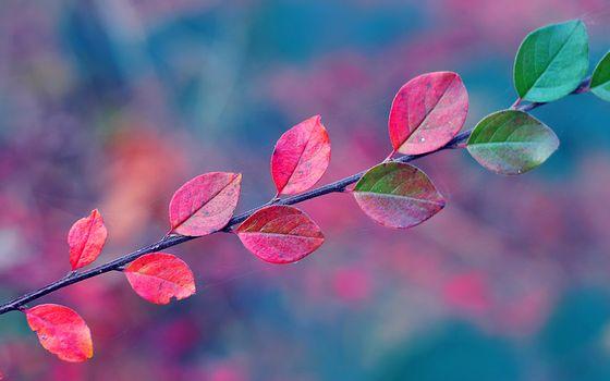 Заставки паутина, осень, листья, ветка