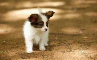 Фото бесплатно прогулка, лето, собака