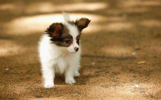 Заставки прогулка, лето, собака