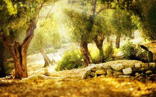 Фото бесплатно view, summer, деревья