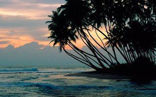 Фото бесплатно небо, берег, пальмы