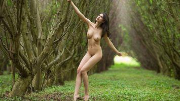 Фото бесплатно дерево, соски, грудь