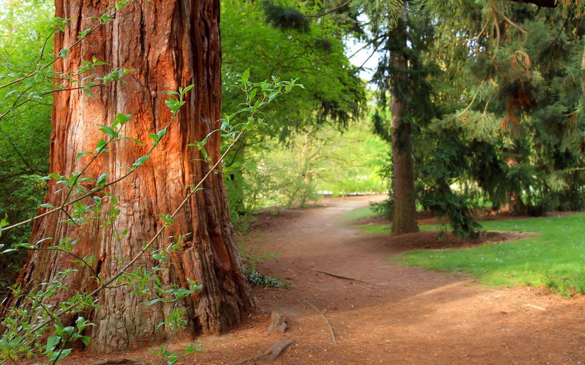 Фото бесплатно дома, стволы, деревья, тропинка, лес, трава, сосны, природа, природа