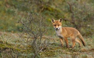 Бесплатные фото животное,мех,шерсть,природа,кусты,трава,животные